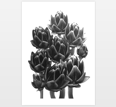 Illustration of an artichoke